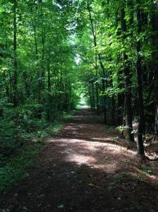 Cool morning hike at Crowder's Mountain, NC